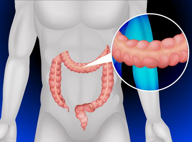 Anatomía del colon y recto - IQL - Instituto Quirúrgico Lacy de ...