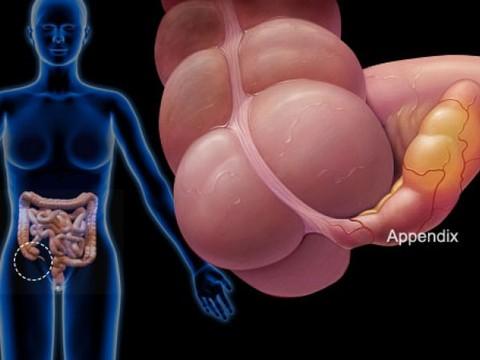 a que lado esta ubicada la apendice